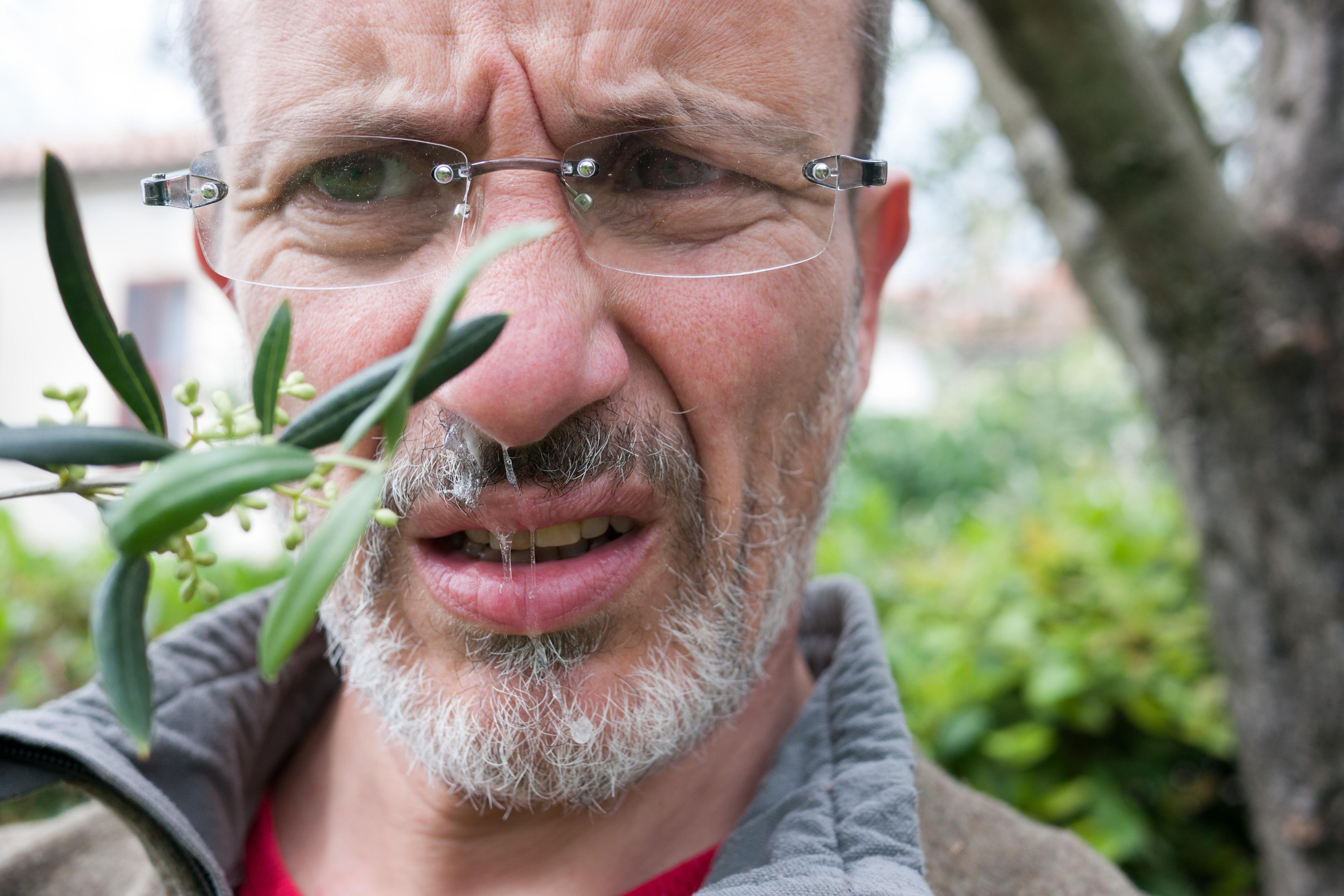 P…ns de fleurs d'olivier ! (photo Dan de Rosilles, réalisée sans trucage)