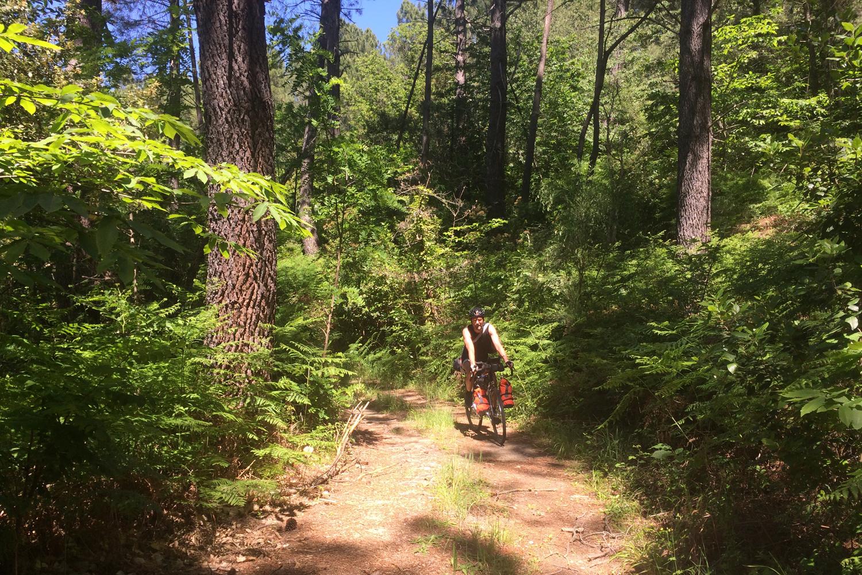 Forêt d'Ardèche